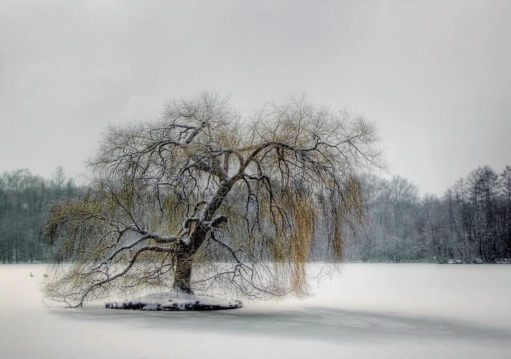 Mein Lieblingsbaum im Winter