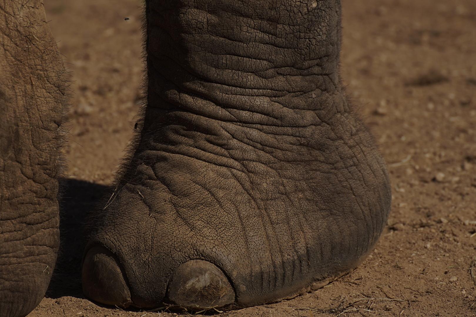 der Elefant und die Mücke