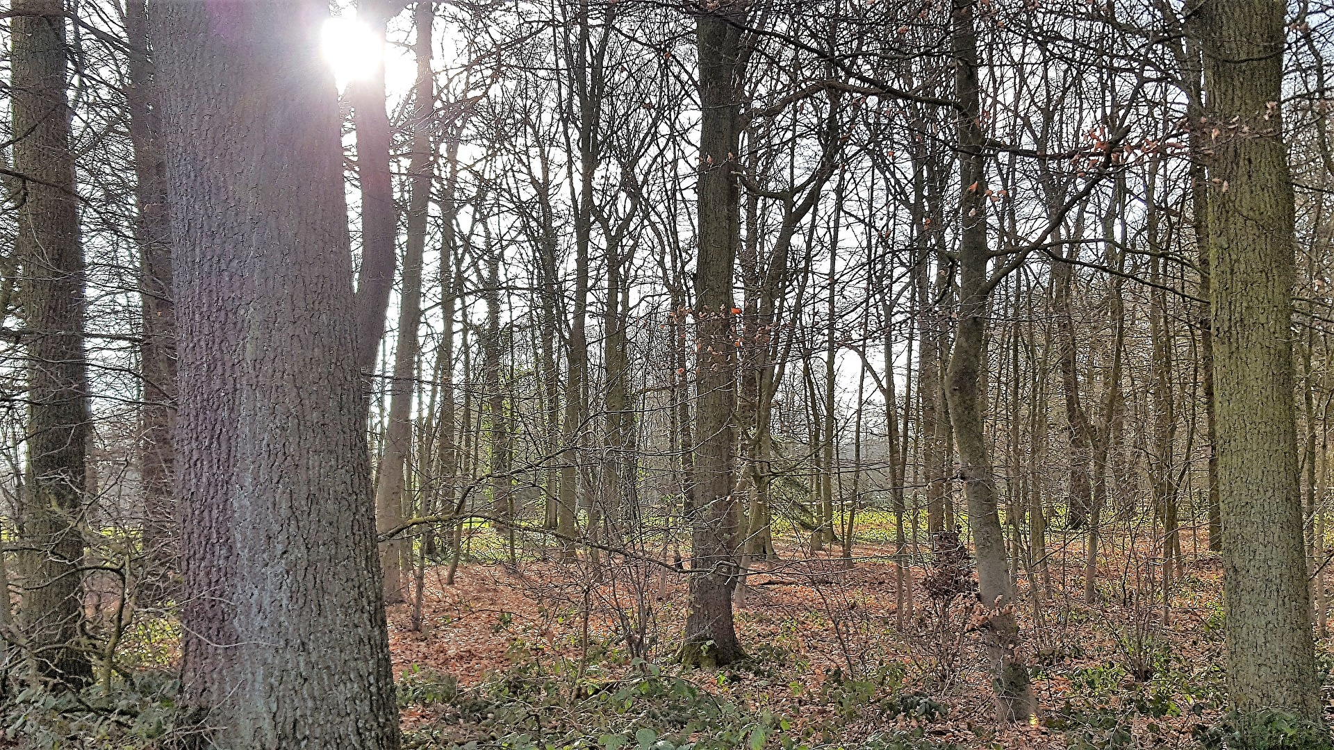 Sonnenstrahlen fallen in den Wald