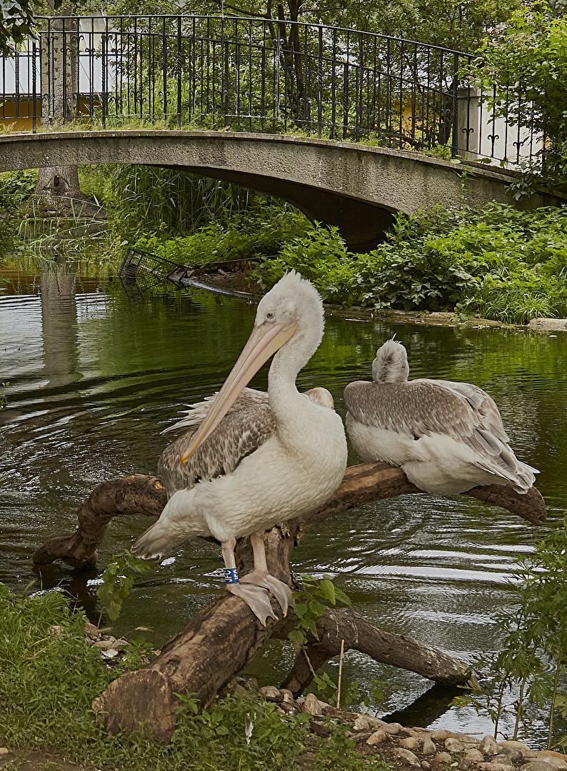 zoo Vienna II