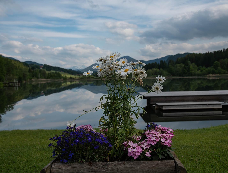 Blumengruß vom Furtnerteich