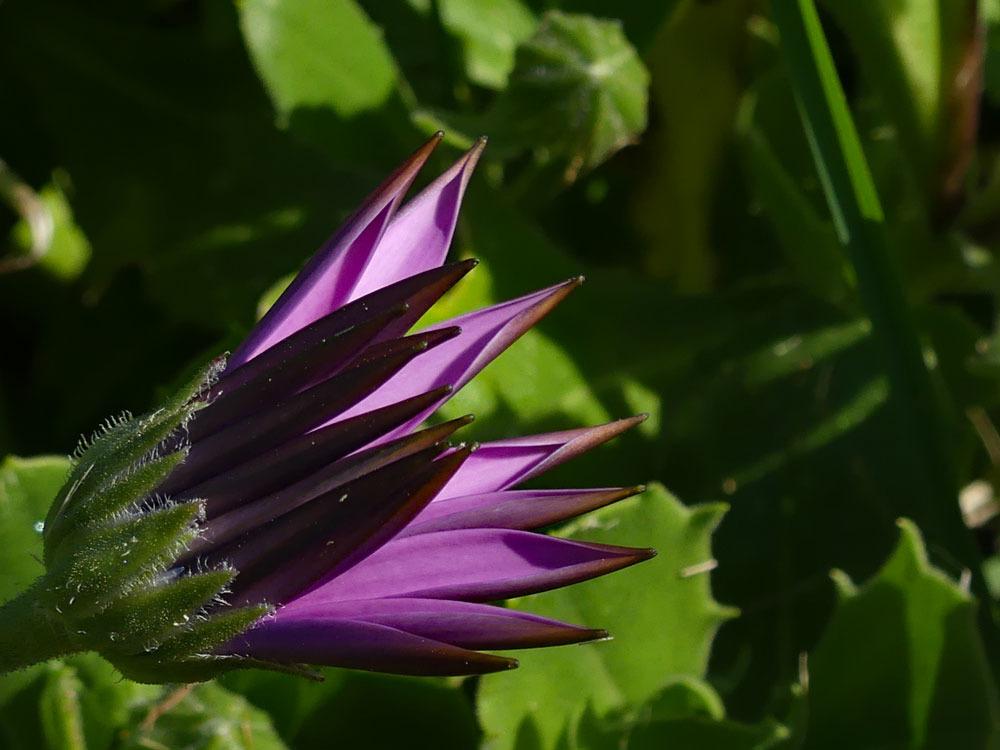Unbekannte Bretonische Blume