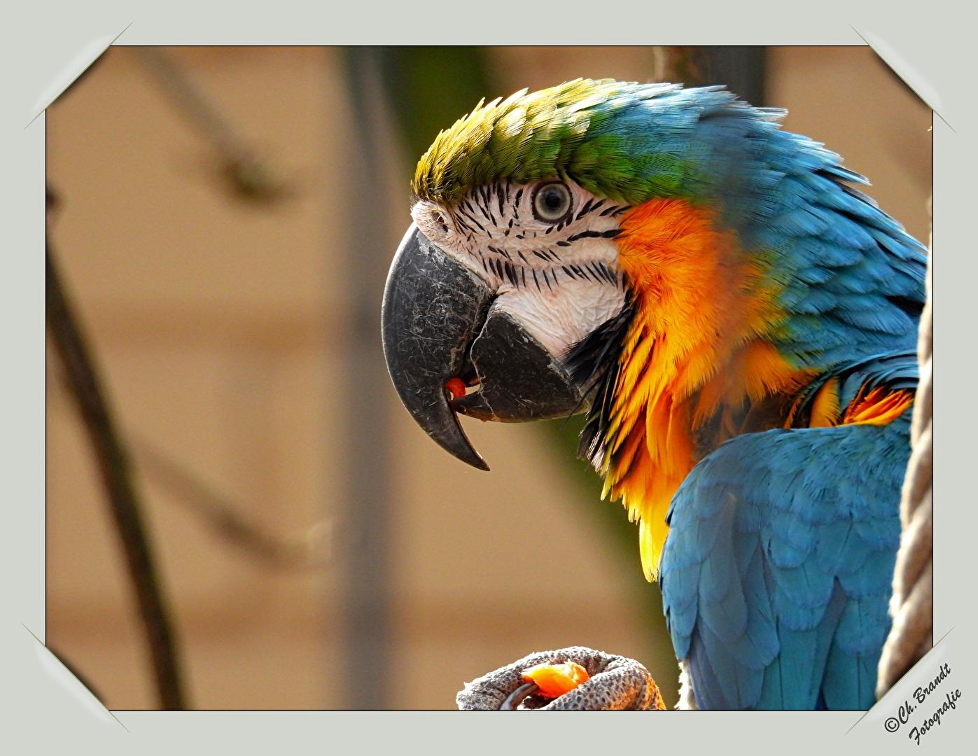 Papagei/Tierpark!