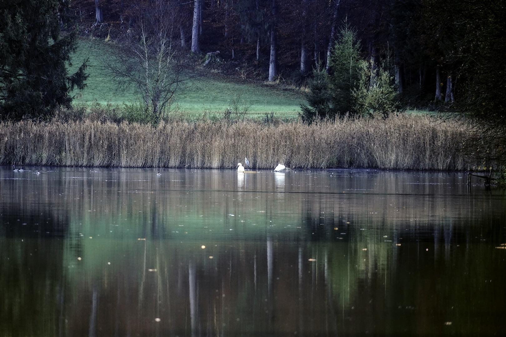 Bach, Fluss & See (allgemein)