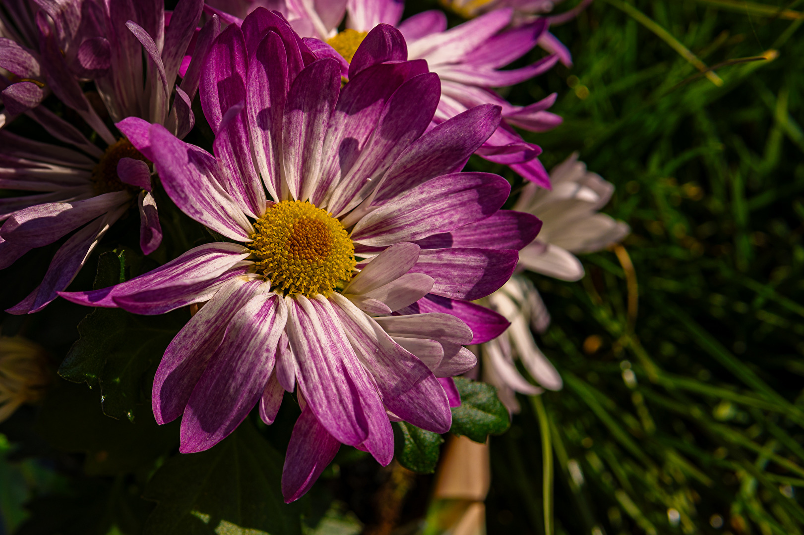 Gartenpflanzen und -blüten (allgemein)
