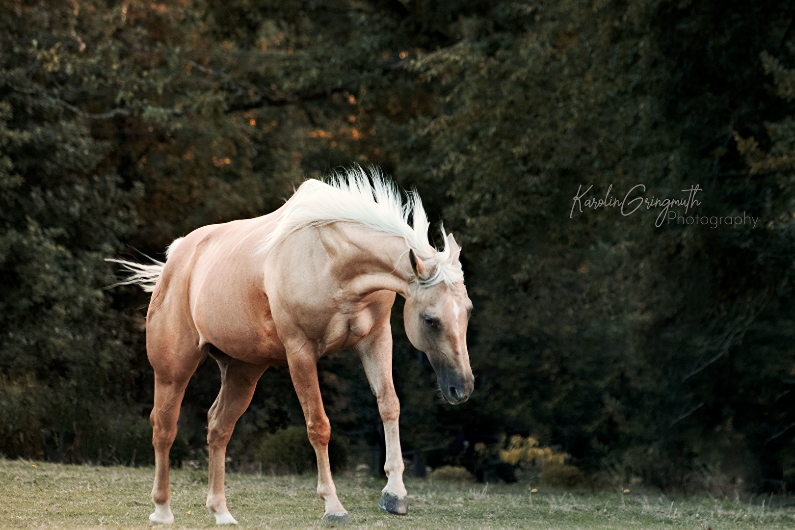 Pferde, Esel & Maultiere