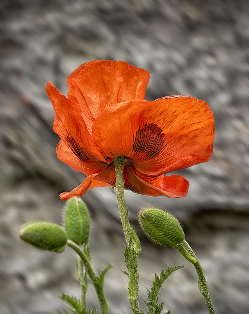 Blüten und Kleinpflanzen (allgemein)