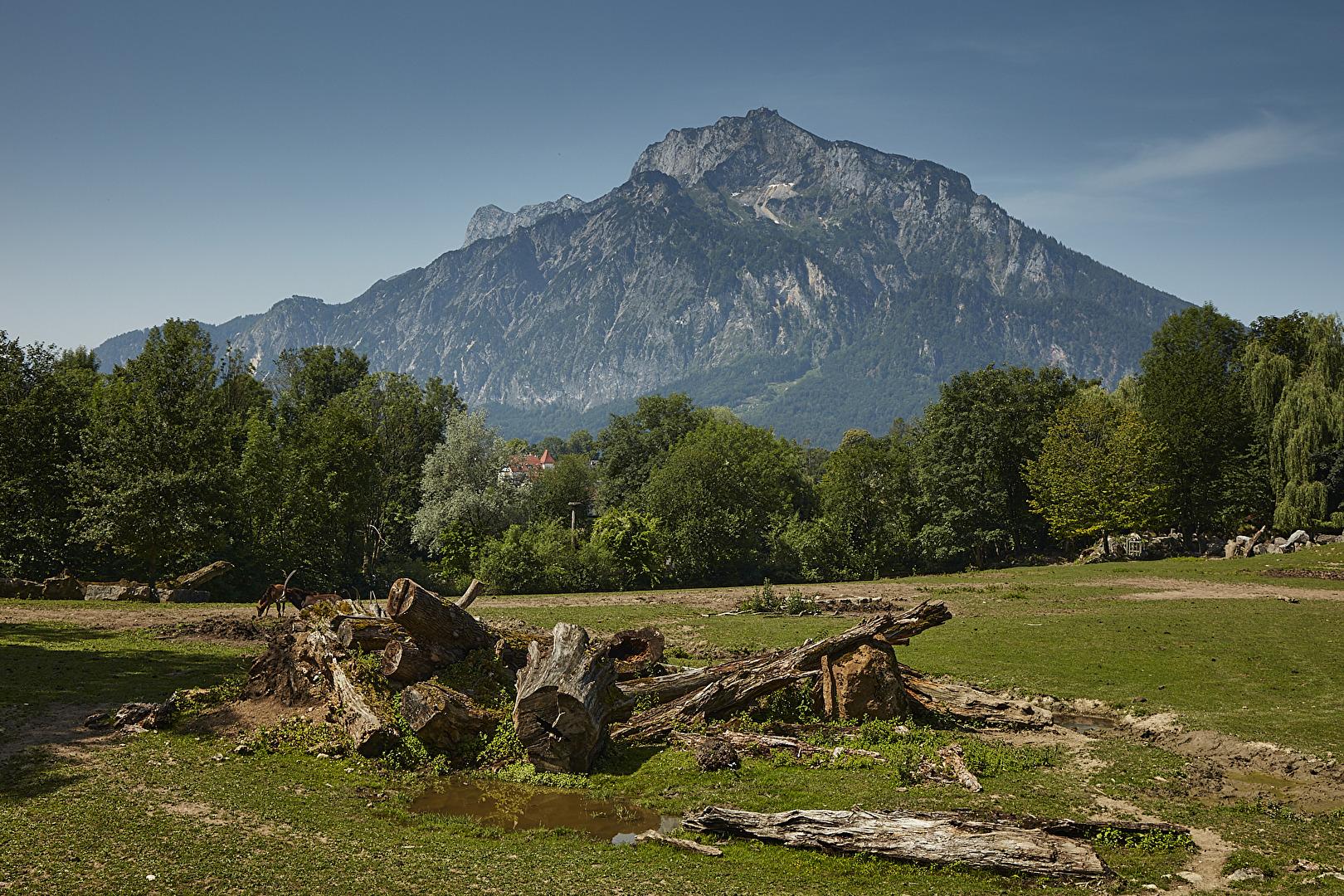 Berg? Vordergrund = Antilopen Gehege im Zoo Salzburg.